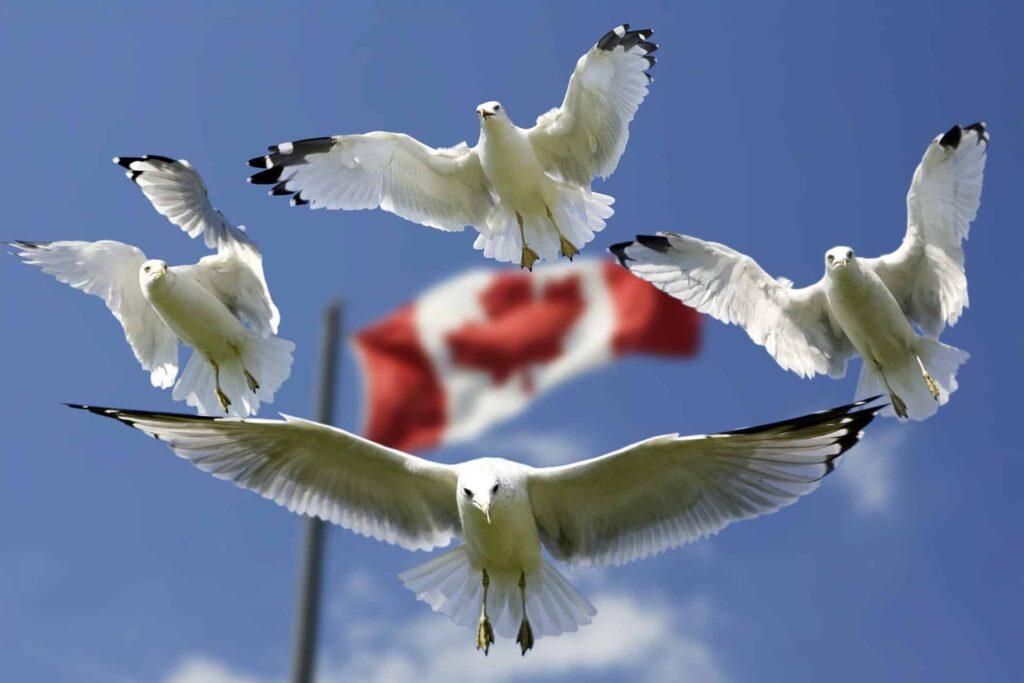 программы иммиграции в канаду